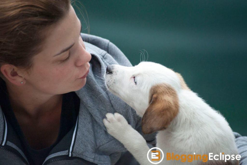 Pet Care Niche